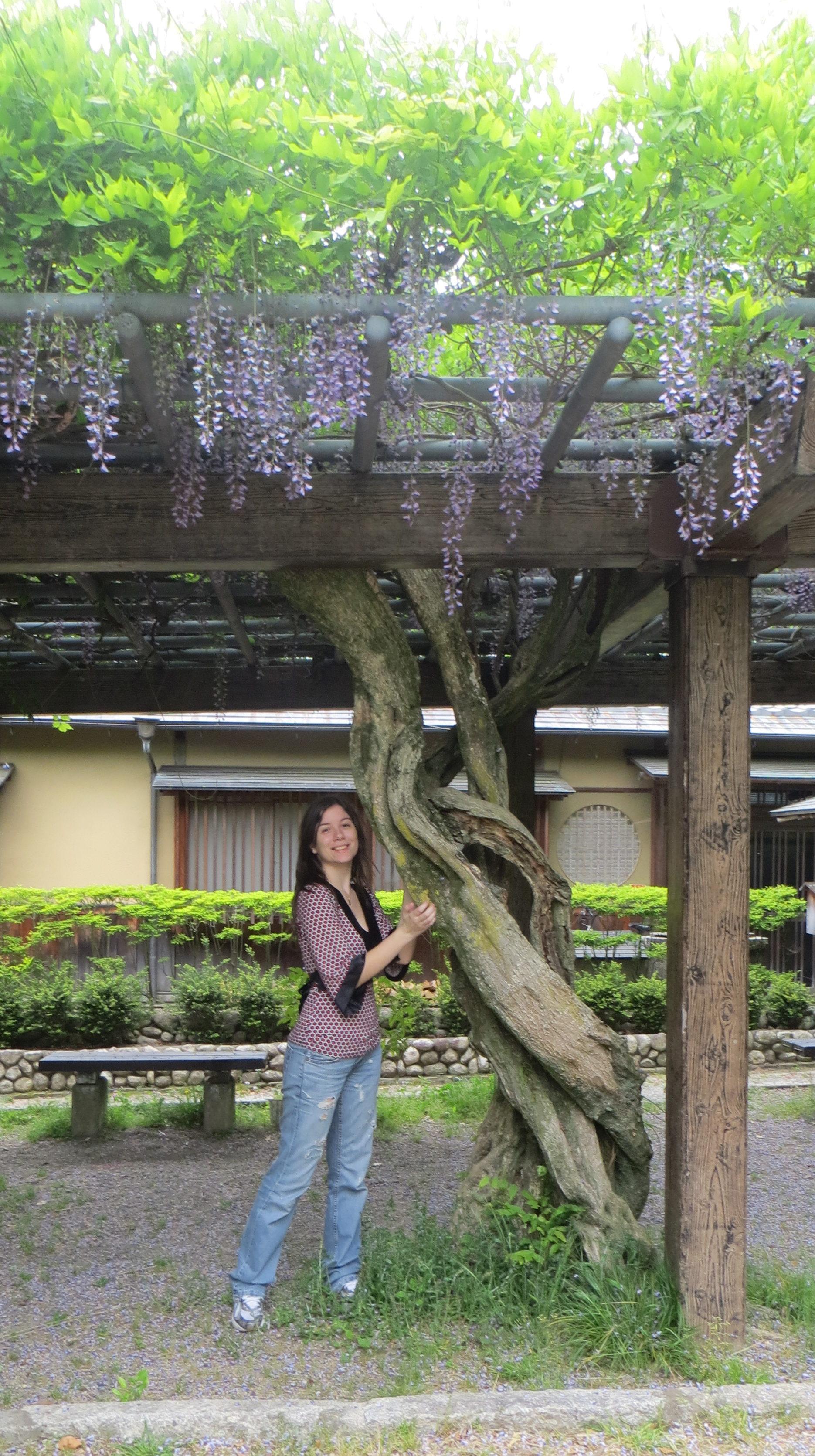 Fiori a Kyoto
